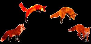 fox-jump-red-trans